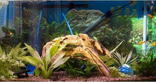 naples fl fishtank ro